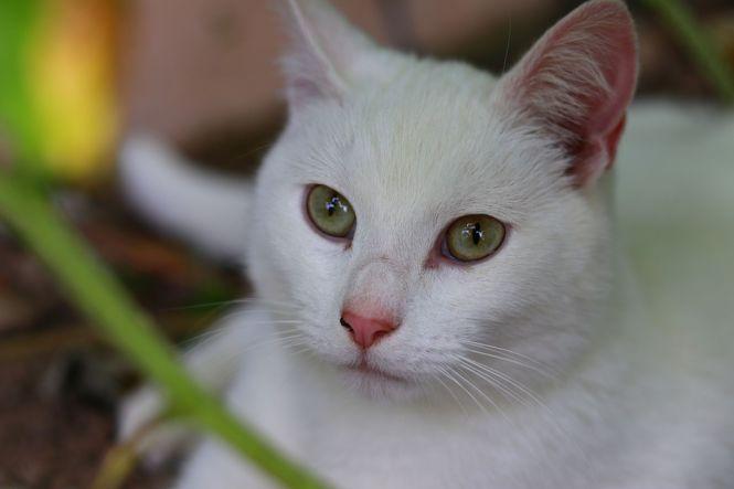 Koci katar może doprowadzić np. do ślepoty